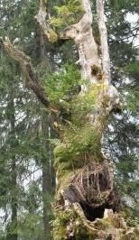 Holz-Lebensraum